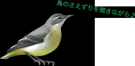 鳥のさえずりを聞きながら♪