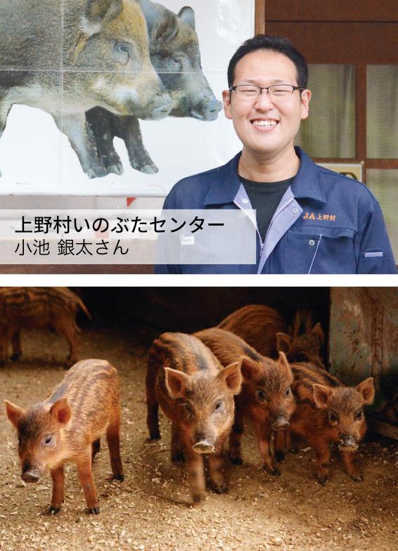 JA上野村 いのぶた事業担当 小池 銀太さん