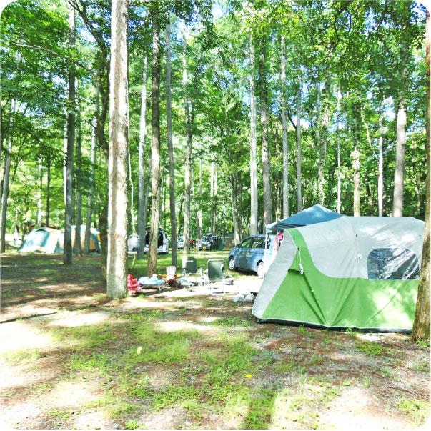 キャンプ(まほーばの森&川和自然公園)